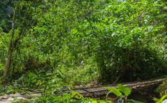 Tropical Rainforest In Amazonian Rainforest Stock Photos
