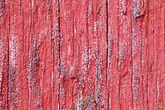 Bright red board wall with small mold growing Stock Photos