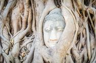 Stock Photo of buddha head statue under root tree in ayutthaya thailand