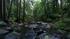 Australia forest landscape Stock Footage