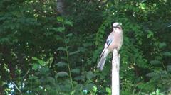 Bird rest calm park stick wildlife nature wilderness predator relax looking food Stock Footage