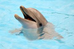 Onnellinen Dolphin Kuvituskuvat