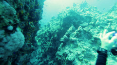 diver swims in the crevice of coral reefs - stock footage