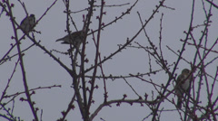 Small bird rest on tree branch nature wildlife Stock Footage