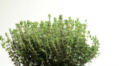 Thyme on a turntable Stock Footage