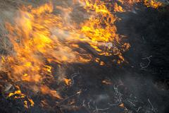 fire. old grass burning in a field - stock photo