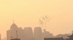 Doves flying over city,Beijing,China. - stock footage