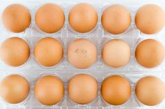 Stock Photo of eggs packed isolated white background