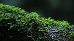 Macro Rainforest tree pan Stock Footage