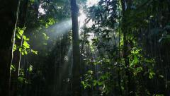 Sun Rays through Rainforest trees Stock Footage