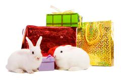 Two  rabbits with gifts Stock Photos