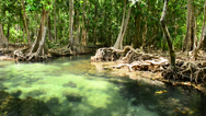 Stock Video Footage of Mangrove Forests