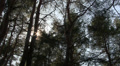 Sunshine through tree branches in wood. Time-lapse HD Footage