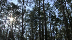 Sunshine through tree branches in wood. Time-lapse Stock Footage