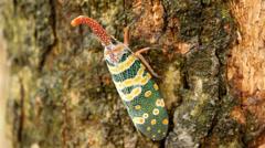 Nice green cicada Stock Footage