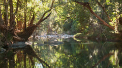 Fresh water creek Australia Stock Footage