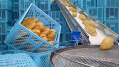 Fresh baked bread on conveyor belt Stock Footage