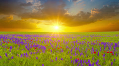 Field of flowers and the cloudy sky. 4K. FULL HD, 4096x2304. Stock Footage