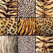 Collection of wild cats fur Stock Photos