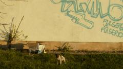 Stray dog cubs and grafitti - stock footage