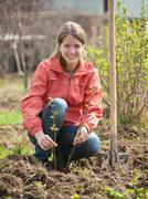 woman resetting  raspberry sprouts - stock photo
