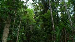 Australian Rainforest Landscape scene Stock Footage
