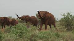 Elephants testing the wind Stock Footage