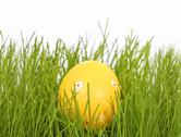 Stock Photo of easter egg in grass