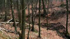 Wild forest of the german Harz mountains Stock Footage