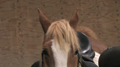 Close up of a horse that looks into the camera Stock Footage