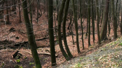 Hiking and walking in a mountain forest Stock Footage