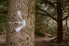 arrow painted on a tree trunk in the forest - stock photo