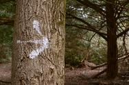 Stock Photo of arrow painted on a tree trunk in the forest