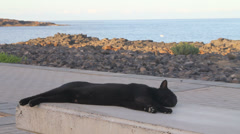 A lazy cat relaxing on a stone bench Stock Footage