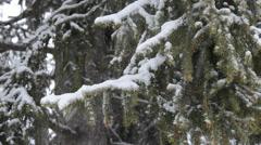 Wood, snow, snowfall,  Gran Paradiso, Stock Footage