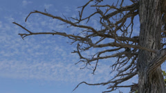 Cypress clouds timelapse - stock footage
