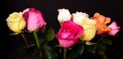 Rose bouquest Stock Photos