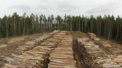 Raw wood storage, air view Stock Footage