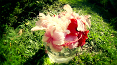 Tropical Flowers in Sunny Day Stock Footage