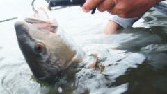 Redfish Fishing Stock Footage
