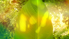 Game of light, natural greenery background Stock Footage
