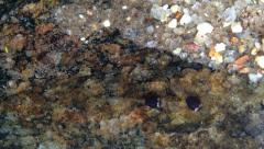 Tadpoles, life in the creek Stock Footage