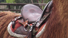 Saddle, Horses, Farm Animals Stock Footage