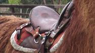 Stock Video Footage of Saddle, Horses, Farm Animals