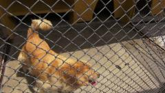 Stock Video Footage of Anxious Caged Dogs, Canines, Neglect, Abuse
