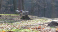 Drone flight in wood. Focus change HD Footage