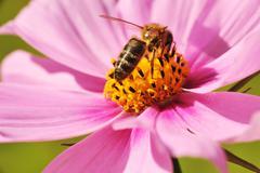 bee getting honey - stock photo