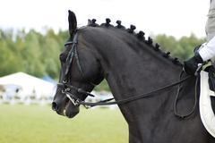beautiful  black horse with rider - stock photo