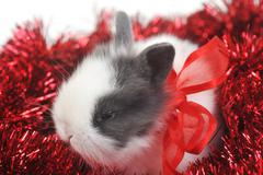 cute small rabbit - stock photo