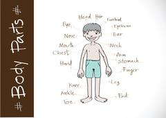 part of body vocabulary in illustration - stock illustration